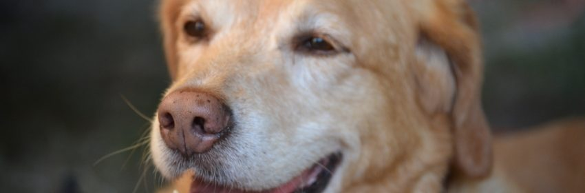 Hund , Archivbild